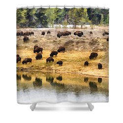 Bison At Indian Pond Shower Curtain