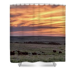 Bison At Sunrise Shower Curtain