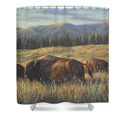 Bison Bliss Shower Curtain