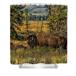 Shower Curtain featuring the photograph Bison Bull Herding Cows by Yeates Photography