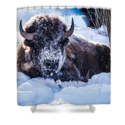 Shower Curtain featuring the photograph Bison At Frozen Dawn by Yeates Photography