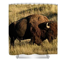 Bison  Shower Curtain by Cindy Murphy - NightVisions