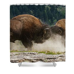 Bison Duel Shower Curtain
