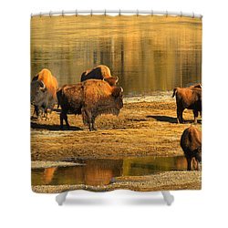 Shower Curtain featuring the photograph Bison Family Crossing by Adam Jewell