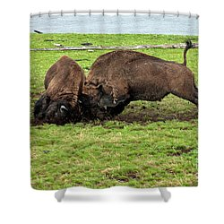Bison Fighting Shower Curtain by Cindy Murphy - NightVisions