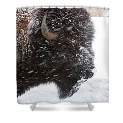 Bison In Snow Shower Curtain