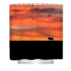 Bison In The Morning Light Shower Curtain by Keith Stokes