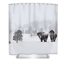 Shower Curtain featuring the photograph Bison In The Snow by Gary Lengyel