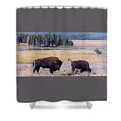 Bison In Yellowstone Shower Curtain