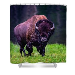 Bison Of Yellowstone Shower Curtain