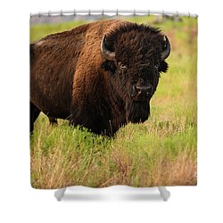 Bison Prime Shower Curtain
