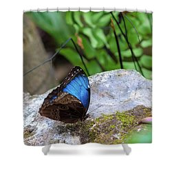 Shower Curtain featuring the photograph Black And Blue Butterfly Eating by Raphael Lopez
