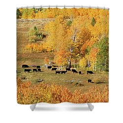 Shower Curtain featuring the photograph Black And Gold by Donna Kennedy