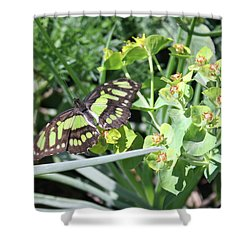 Black And Green Butterfly Shower Curtain