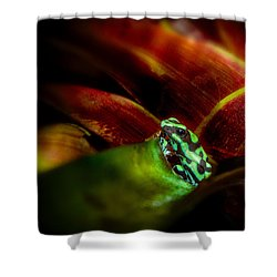 Shower Curtain featuring the photograph Black And Green Dart Frog In The Red Bromeliad by Rikk Flohr