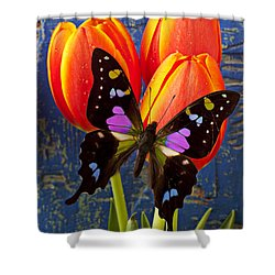 Black And Pink Butterfly Shower Curtain by Garry Gay