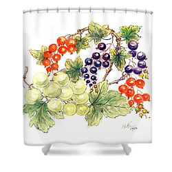 Black And Red Currants With Green Grapes Shower Curtain by Nell Hill