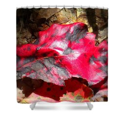 Black And Red Shower Curtain by Ed Smith
