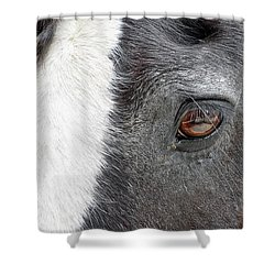 Black And White Beauty Shower Curtain