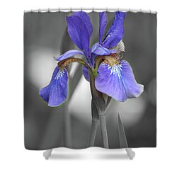 Shower Curtain featuring the photograph Black And White Blue Bearded Iris by Brenda Jacobs