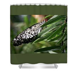 Black And White Butterfly -  Shower Curtain