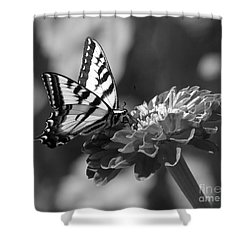 Black And White Butterfly On Zinnia Shower Curtain