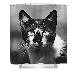 Black And White Cat Close Up Shower Curtain
