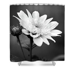 Shower Curtain featuring the photograph Black And White Coreopsis Flower by Christina Rollo