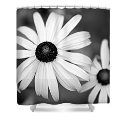 Shower Curtain featuring the photograph Black And White Daisy by Christina Rollo