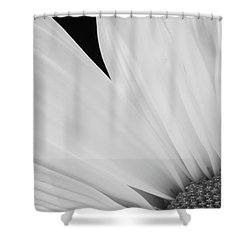 Black And White Daisy Flower Peeking Shower Curtain