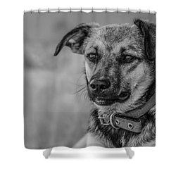 Black And White Dog Portrait Shower Curtain by Daniel Precht