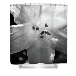 Black And White Easter Lily Shower Curtain