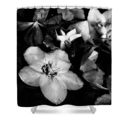 Black And White Flower  Shower Curtain by Kevin Blackburn