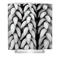Black And White Hanging Plant Detail. Shower Curtain by Cesar Padilla