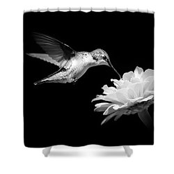 Shower Curtain featuring the photograph Black And White Hummingbird And Flower by Christina Rollo