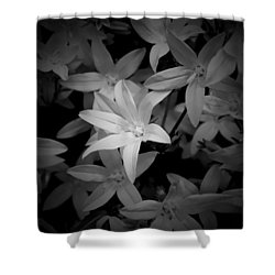 Shower Curtain featuring the photograph Black And White by Milena Ilieva