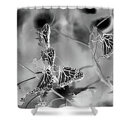 Black And White Monarchs Shower Curtain