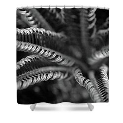 Black And White Palm Abstract 3624 Bw_2 Shower Curtain