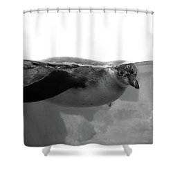 Black And White Penguin Shower Curtain by Brooke T Ryan