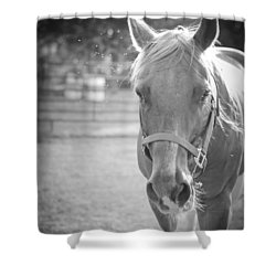 Shower Curtain featuring the photograph Black And White Portrait Of A Horse In The Sun by Kelly Hazel