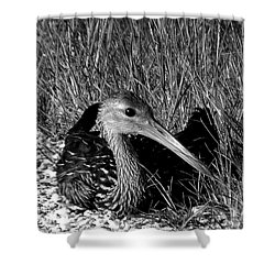 Black And White Resting Limpkin Bird Shower Curtain