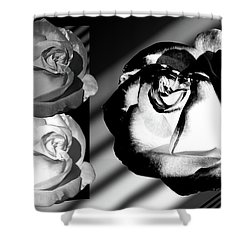 Black And White Roses Shower Curtain by Phyllis Denton