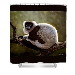 Black And White Ruffed Lemur Shower Curtain