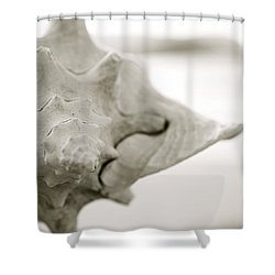 Black And White Seashell Shower Curtain by Kicka Witte - Printscapes