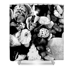 Black And White Seashells Shower Curtain by Kimberly Perry