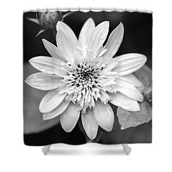Shower Curtain featuring the photograph Black And White Sunrise Coreopsis by Christina Rollo