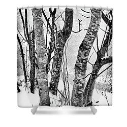 Black And White Trees Shower Curtain