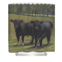 Black Angus Buddies Shower Curtain by Terri  Meyer