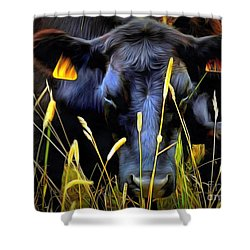 Black Angus Cow  Shower Curtain by Janine Riley