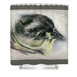 Shower Curtain featuring the pastel Black Australorp Chick Portrait by MM Anderson